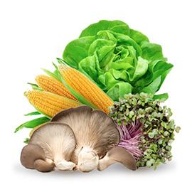 Verdure a foglia, germogli, <br>funghi, mais